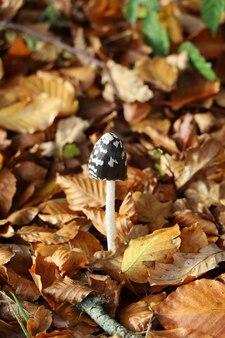 Capture verticale d'un seul champignon noir et blanc entouré de feuilles jaunes