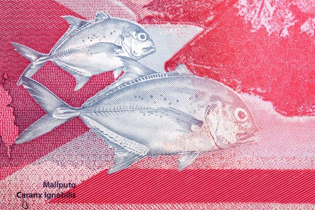 Carangue géante un portrait de peso philippin