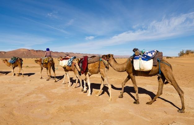 Caravane de chameaux traversant le désert