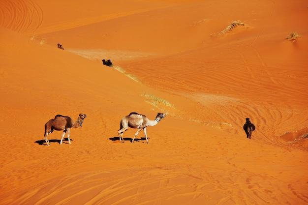 Caravane dans le désert du sahara