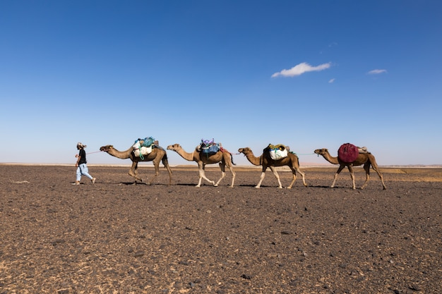 Caravane dans le désert