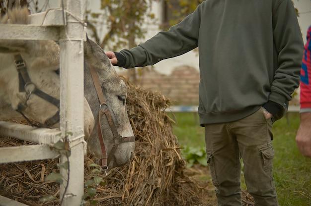 Caresser un âne sur la clôture dans un élevage