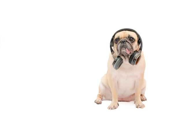 Carlin chien écouter de la musique avec des écouteurs bluetooth