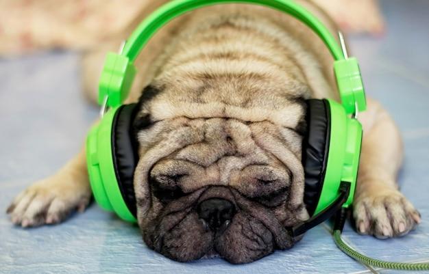 Carlin avec des écouteurs perdus dans la musique. l'accent est mis sur les yeux.