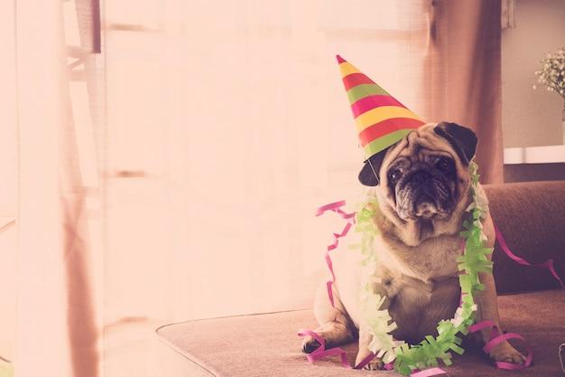 Carnaval concept drôle anniversaire celenration nouvel an noël avec chien carlin fou avec chapeau de style événement coloré