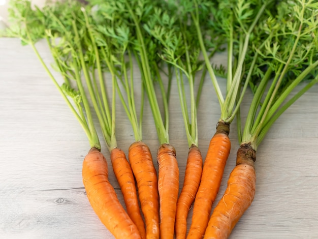 Carottes fraîches uniquement du jardin. carottes orange avec une tige verte sur une surface claire. légume sain appétissant.