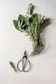 Carottes et herbes de cuisine