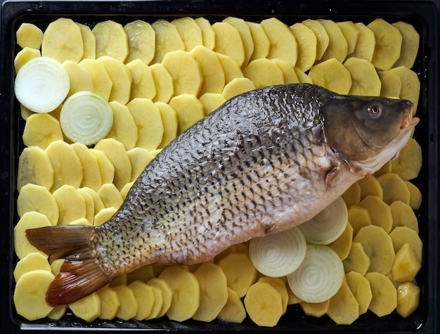Carpe crue, poisson entier avec pommes de terre tranchées sur plateau sur bleu.