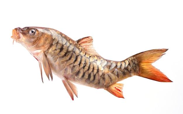 Carpe de poisson