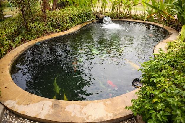 Carpes fantaisie colorées poissons koi dans un étang de jardin