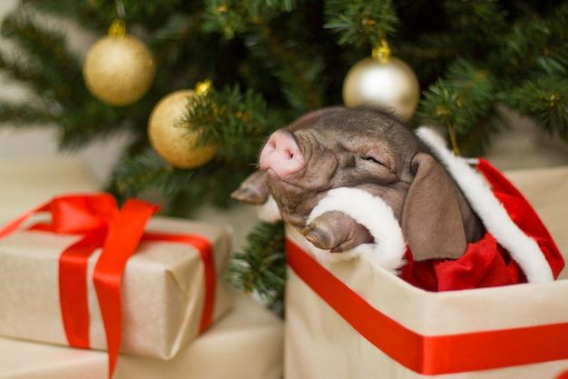 Carte de noël et du nouvel an avec joli cochon de père noël nouveau-né dans une boîte cadeau sous un sapin