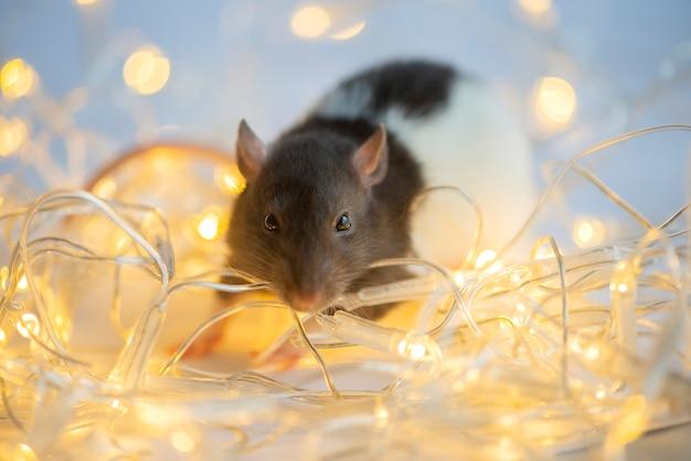 Carte de nouvel an. symbole du rat du nouvel an 2020 sur les lumières de noël bokeh