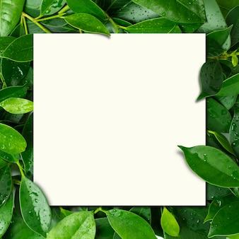 Carte en papier sur fond de feuilles fraîches avec des gouttes d'eau.