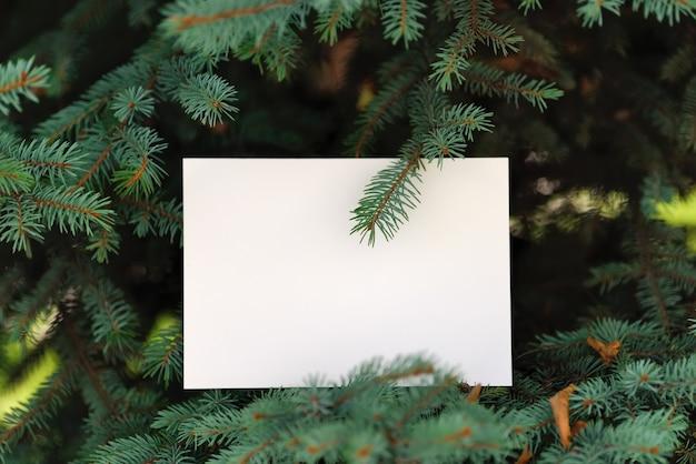 Carte papier sur pin vert