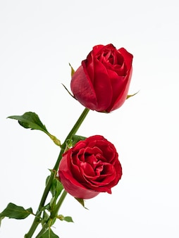 Carte de saint valentin. deux roses rouges.