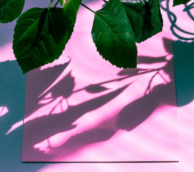 Carte vide rose, feuille pour l'écriture