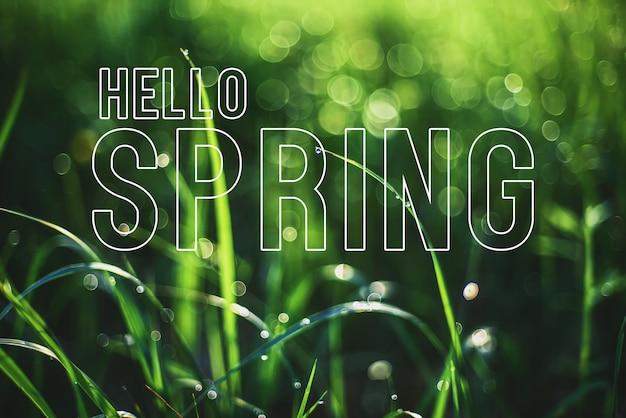 Carte de voeux avec l'inscription bonjour printemps. herbe verte avec des gouttes de rosée