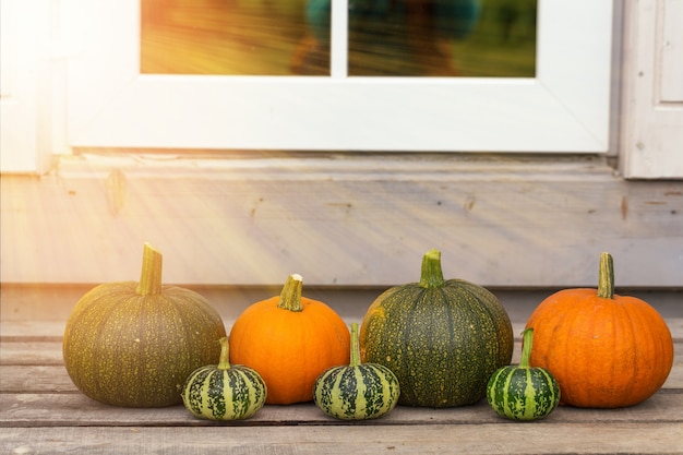 Carte de voeux joyeux halloween. citrouille orange vif. décorations de récolte de légumes naturels.