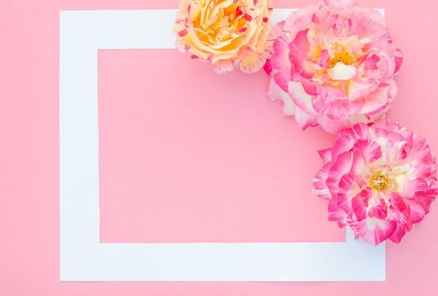 Carte de voeux, roses délicates sur rose avec cadre blanc