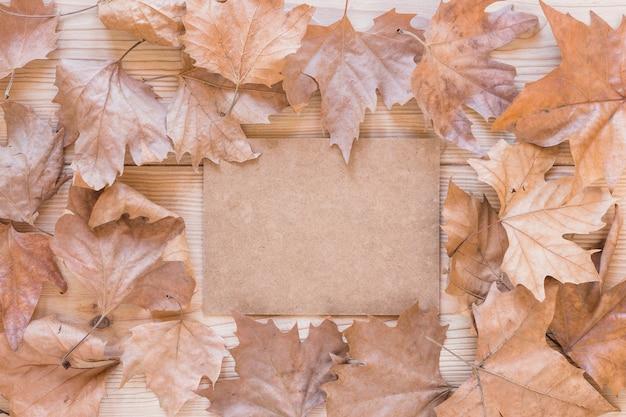 Carton entre feuilles sèches