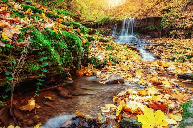 Cascade au soleil d'automne. monde de la beauté. carpates. ukraine. l'europe 