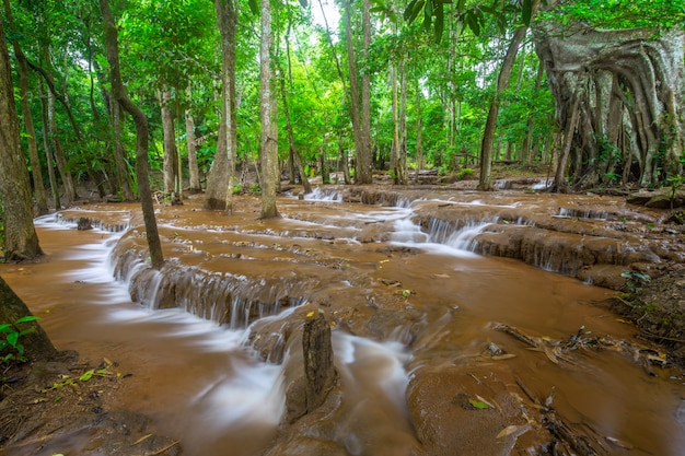 Cascade, dans, forêt tropicale, cascade pa wai, province tak, thaï