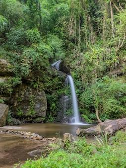 Cascade de la forêt à feuilles persistantes sur la montagne doi suthep à chiang mai, thaïlande