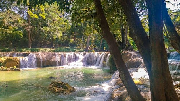 Cascade panoramique exotique belle forêt tropicale profonde cascades fraîches dans la forêt profonde
