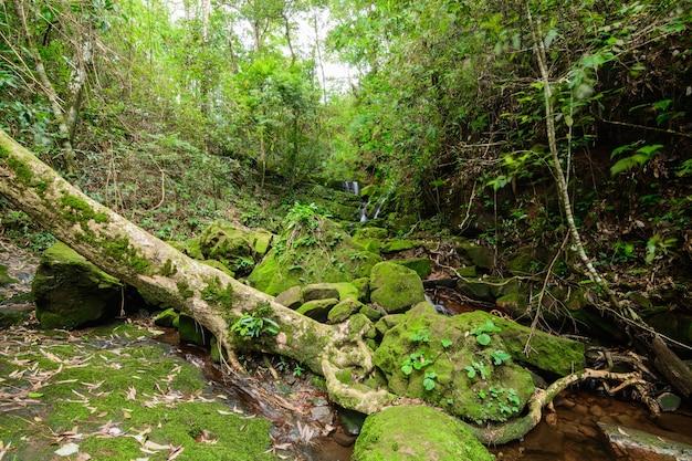 Cascade de sai tip dans le parc national de phu soi dao, en thaïlande
