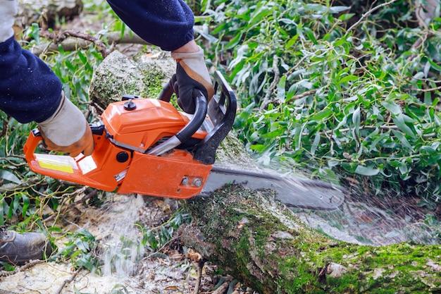Cassé le tronc d'arbre après l'ouragan avec un travailleur coupant avec une tronçonneuse