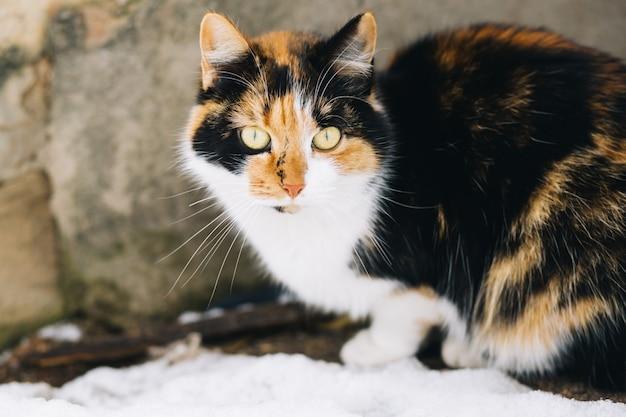 Cat attend maître en plein air
