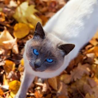 Cat automne, doux