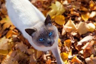 Cat automne, féline