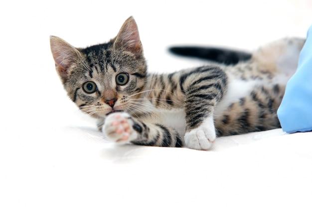 Cat couché