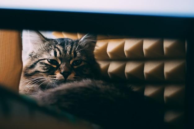 Cat est allongé sur la table et regarde avec suspicion avec des panneaux sonores