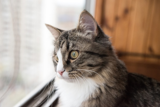 Cat regarde par la fenêtre. beau chat assis sur un rebord de fenêtre et regardant par la fenêtre.