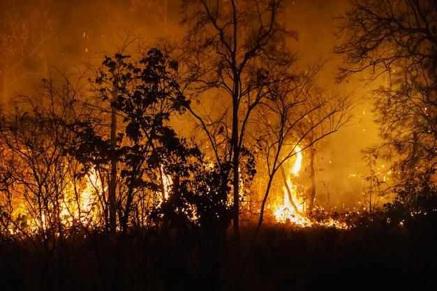La catastrophe des incendies de forêt brûle causée par l'homme