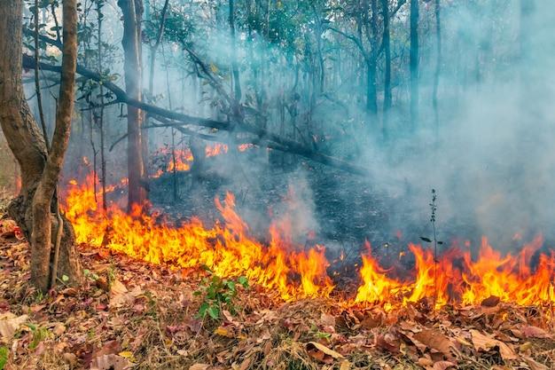 La Catastrophe Des Incendies De Forêt Brûle Causée Par L'homme Photo Premium