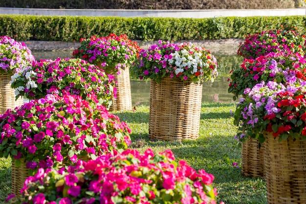 Catharanthus roseus sur la décoration de panier d'armure dans le jardin en plein air