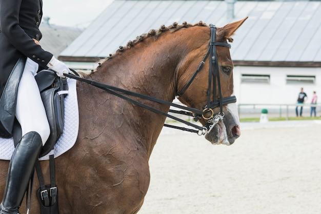 Cavalier sur une compétition de chevaux