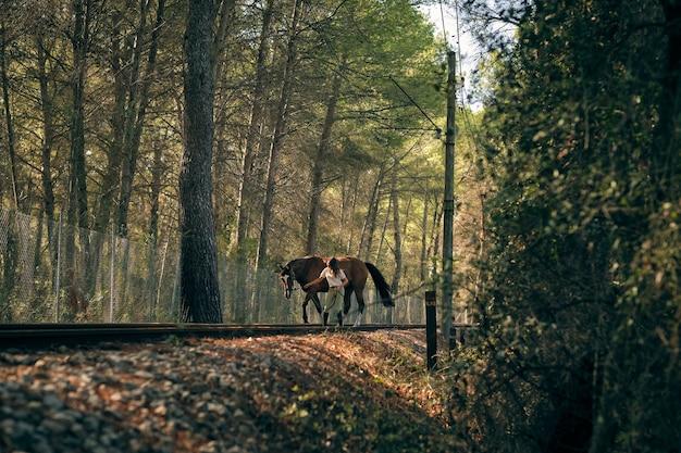 Cavalière à cheval en forêt en été