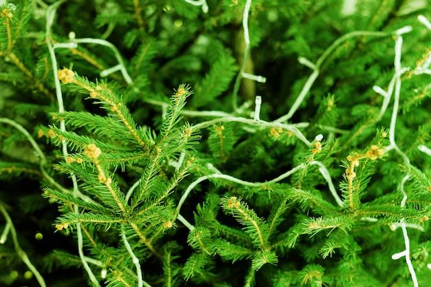 Célébration de noël. gros plan de branches de sapin vert décorées de guirlandes lumineuses.