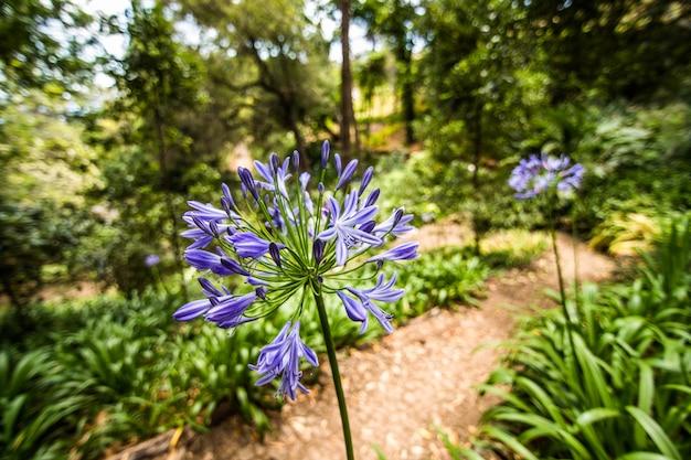 Le célèbre jardin botanique de funchal, île de madère au portugal