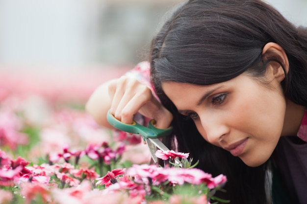 Centre de jardinage soigneusement des fleurs