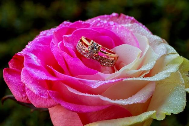 Centre de rose rose avec des gouttes d'eau