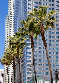 La centre-ville de los angeles pershing square palm tress