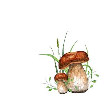Cèpes. illustration aquarelle