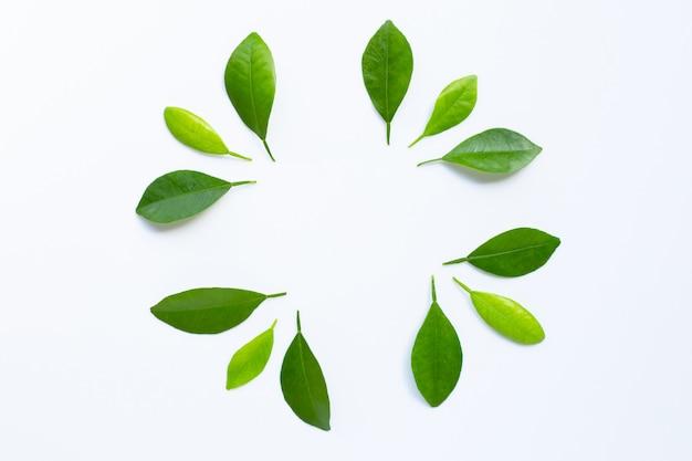 Cercle de feuilles d'agrumes