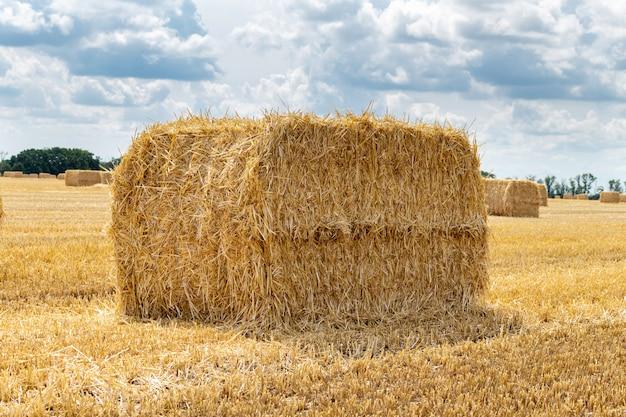 Céréales céréalières récoltées blé orge champ de grains de seigle, avec des meules de foin ballots de paille pieux de forme rectangulaire cubique