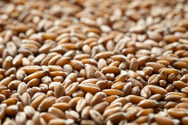 Céréales d'épeautre